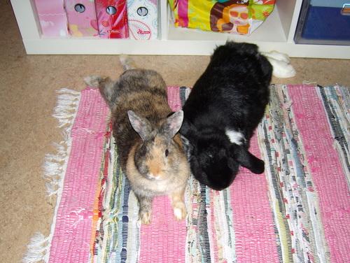Gwen und Bennybunny
