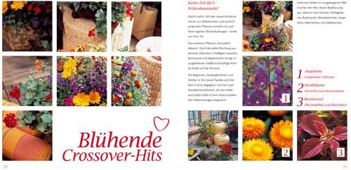 Balkonliene Online Magazin: Blühende Crossover-Hits