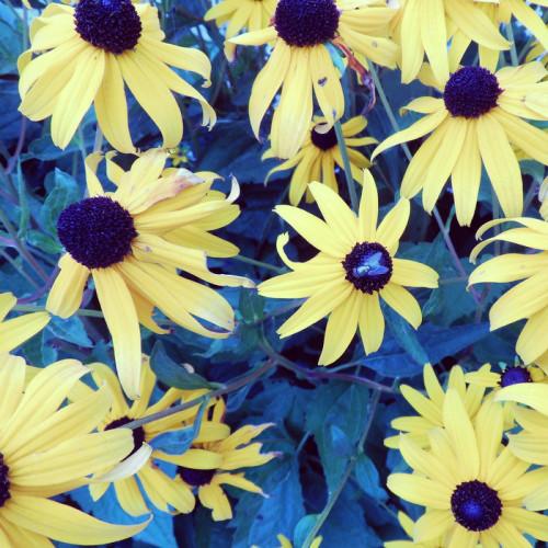 Blumen angefliegt