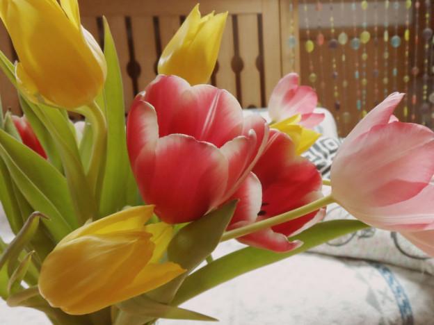 Erste Tulpen 2014