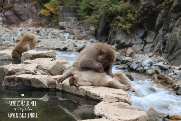 Japanische Affen baden in heißen Quellen